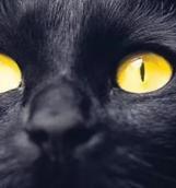 Бернар Вербер «Завтрашний день кошки»: О неизбежной свободе