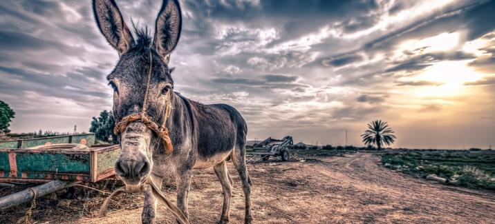 Исполнение желаний, или Как накормить осла
