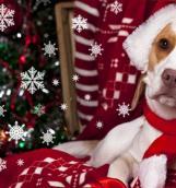 Известный астролог Наталия Исаичева составила прогноз на 2018 год Желтой Собаки