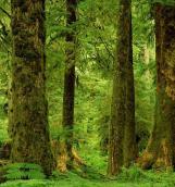 20 марта Международный день леса